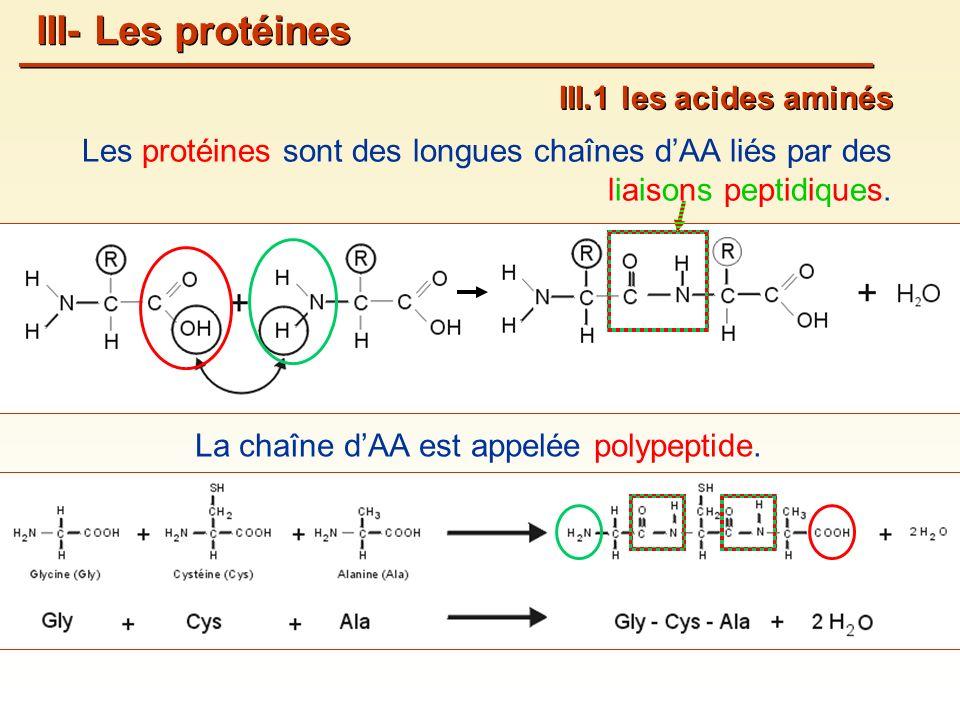 Les protéines sont des longues chaînes dAA liés par des liaisons peptidiques.