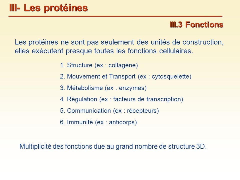 III.3 Fonctions Les protéines ne sont pas seulement des unités de construction, elles exécutent presque toutes les fonctions cellulaires.