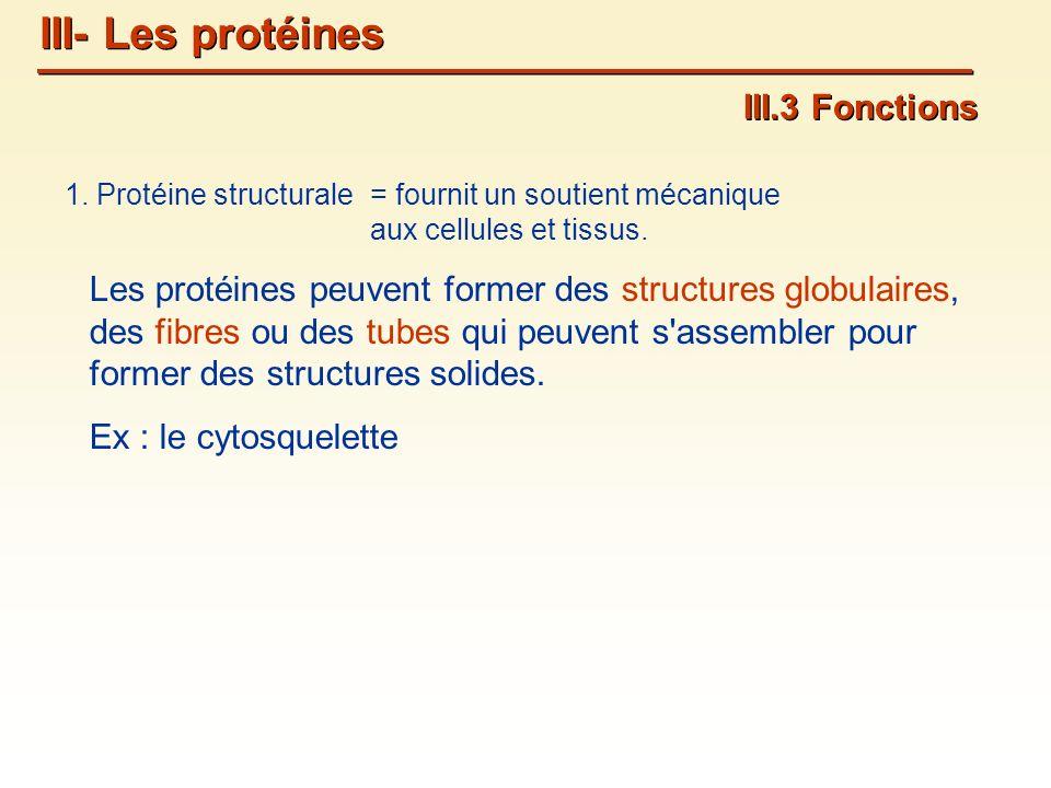 1.Protéine structurale III.3 Fonctions = fournit un soutient mécanique aux cellules et tissus.