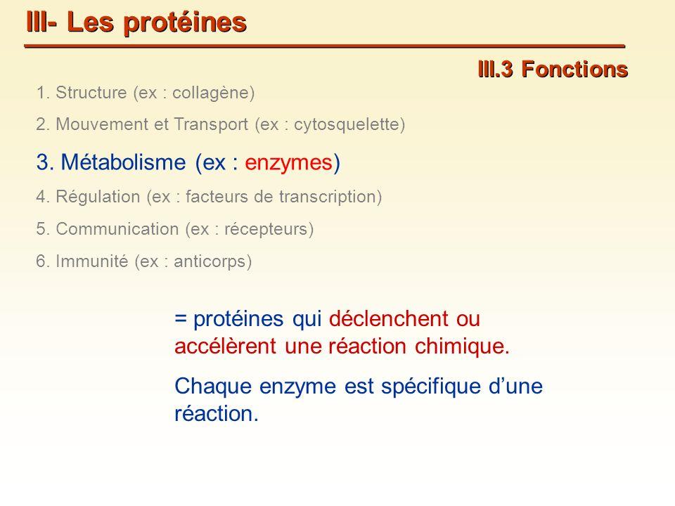 III.3 Fonctions = protéines qui déclenchent ou accélèrent une réaction chimique.