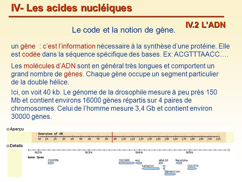 un gène : cest linformation nécessaire à la synthèse dune protéine.