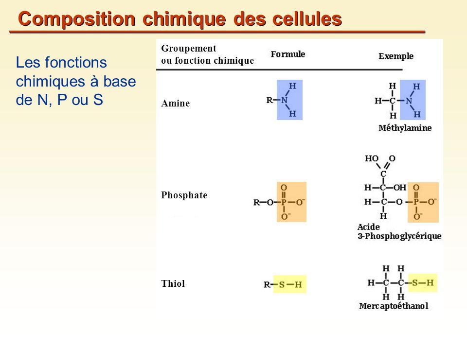 Les fonctions chimiques à base de N, P ou S Composition chimique des cellules Groupement ou fonction chimique Amine Phosphate Thiol