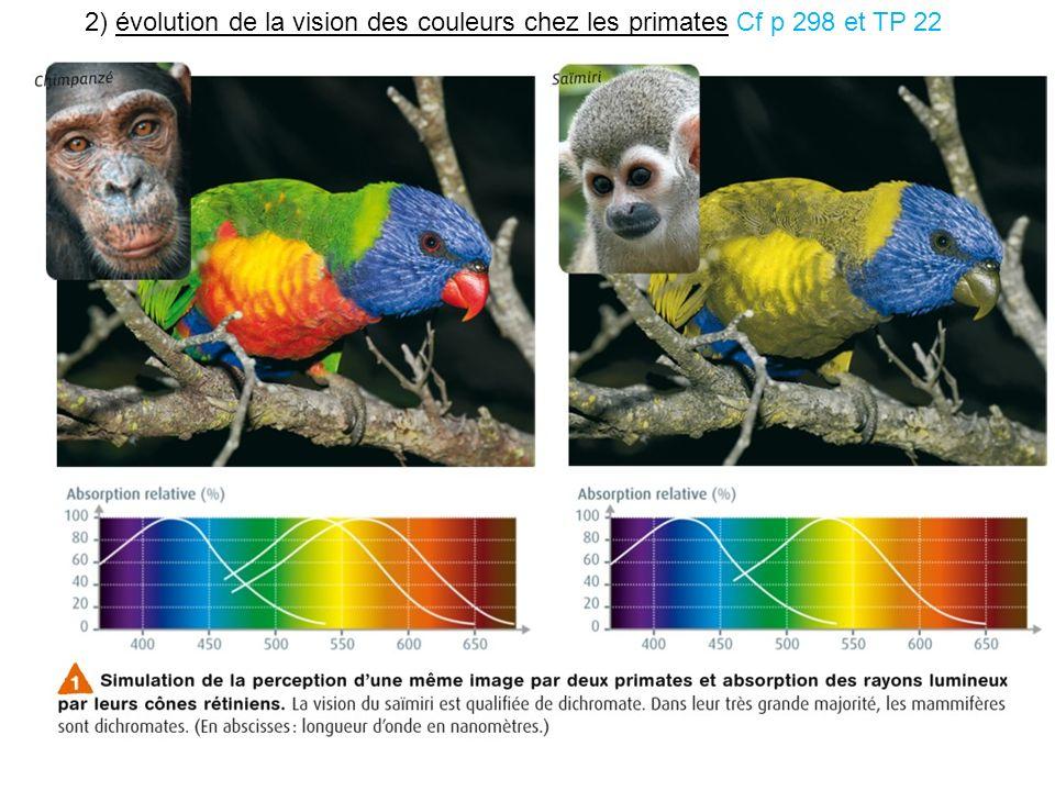 2) évolution de la vision des couleurs chez les primates Cf p 298 et TP 22