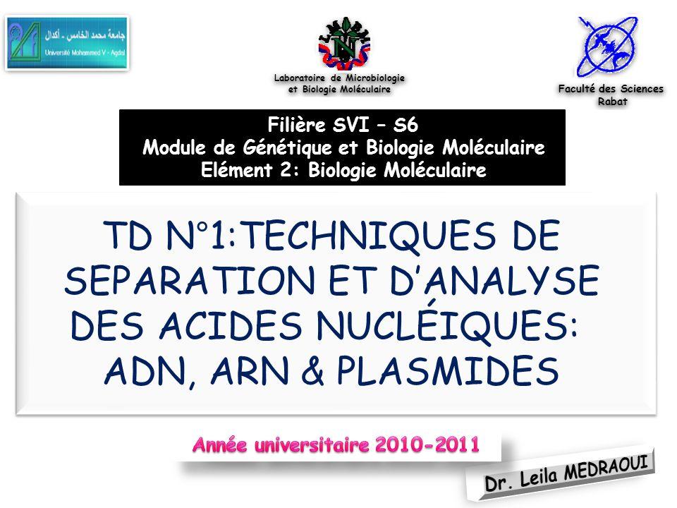 TD1.TECHNIQUES DE SEPARATION ET DANALYSE DES ACIDES NUCLÉIQUES 22 Suspension de lADN plasmidique dans TE ou Eau pure Elimination des ARN/ribonucléases (hydrolyse sélective des ARN/ ADN intact) Concentration de l ADN plasmidique par précipitation à l alcool Récupération de lADN par centrifugation Neutralisation rapide /acétate de potassium (pH 5,5) Renaturation de lADN plasmidiquePrécipitation de lADN Chromosomique Lyse des cellules /détergent (SDS) en présence de soude (pH 13) Dénaturation de l ADN total Préparation d ADN plasmidique TECHNIQUE A REALISER EN TP