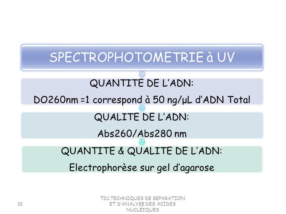 TD1.TECHNIQUES DE SEPARATION ET DANALYSE DES ACIDES NUCLÉIQUES 10 SPECTROPHOTOMETRIE à UV QUANTITE DE LADN: DO260nm =1 correspond à 50 ng/μL dADN Tota