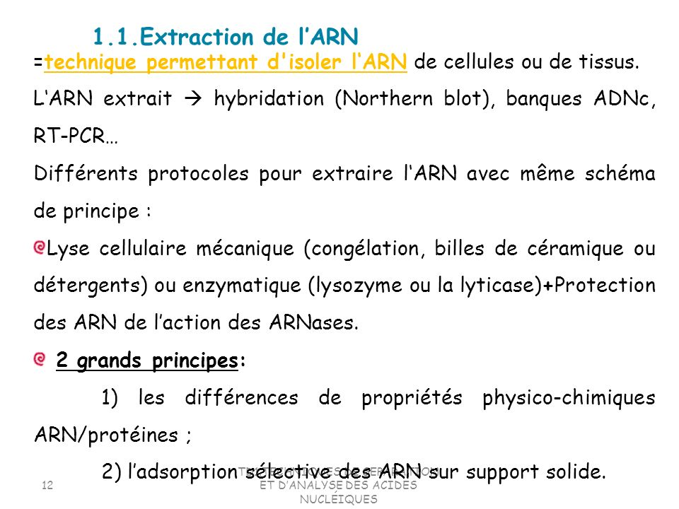 TD1.TECHNIQUES DE SEPARATION ET DANALYSE DES ACIDES NUCLÉIQUES 12 =technique permettant d'isoler lARN de cellules ou de tissus. LARN extrait hybridati