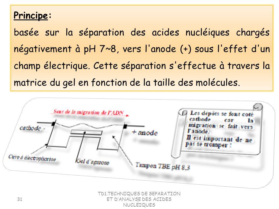 TD1.TECHNIQUES DE SEPARATION ET DANALYSE DES ACIDES NUCLÉIQUES 31 Principe: basée sur la séparation des acides nucléiques chargés négativement à pH 7~