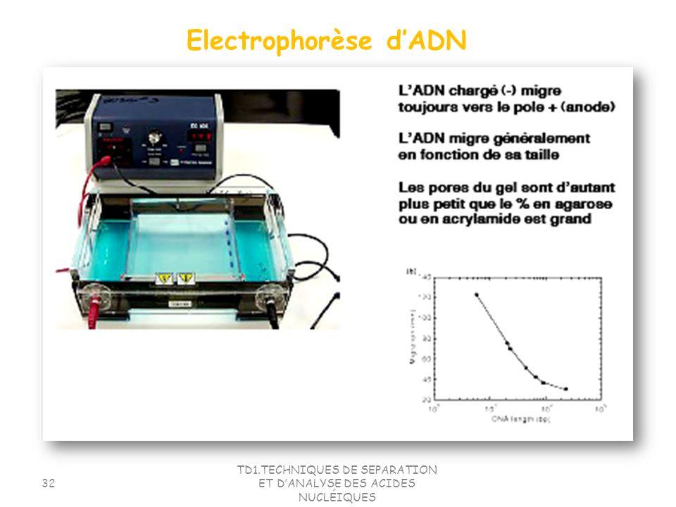 TD1.TECHNIQUES DE SEPARATION ET DANALYSE DES ACIDES NUCLÉIQUES 32 Electrophorèse dADN