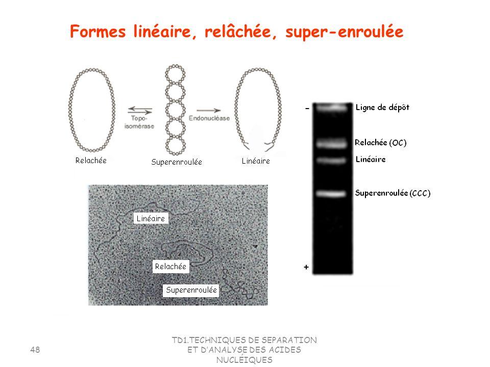 TD1.TECHNIQUES DE SEPARATION ET DANALYSE DES ACIDES NUCLÉIQUES 48 Formes linéaire, relâchée, super-enroulée