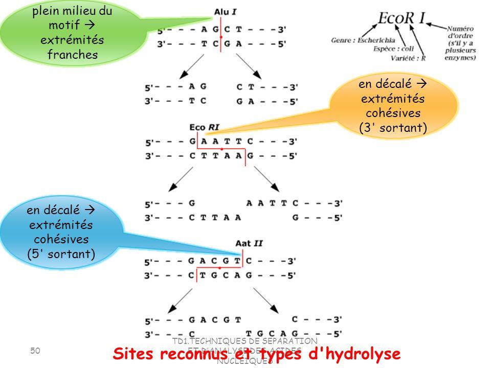TD1.TECHNIQUES DE SEPARATION ET DANALYSE DES ACIDES NUCLÉIQUES 50 Sites reconnus et types d'hydrolyse en décalé extrémités cohésives (3' sortant) en d