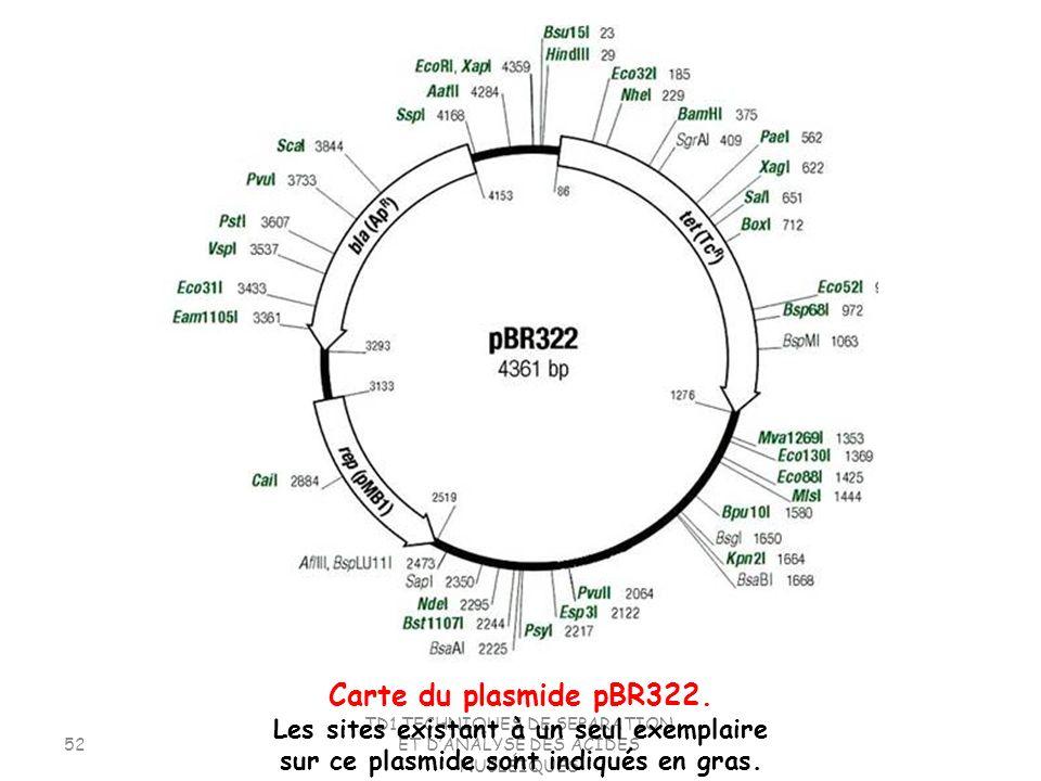 TD1.TECHNIQUES DE SEPARATION ET DANALYSE DES ACIDES NUCLÉIQUES 52 Carte du plasmide pBR322. Les sites existant à un seul exemplaire sur ce plasmide so
