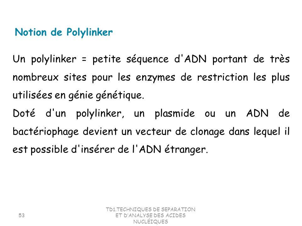TD1.TECHNIQUES DE SEPARATION ET DANALYSE DES ACIDES NUCLÉIQUES 53 Un polylinker = petite séquence d'ADN portant de très nombreux sites pour les enzyme
