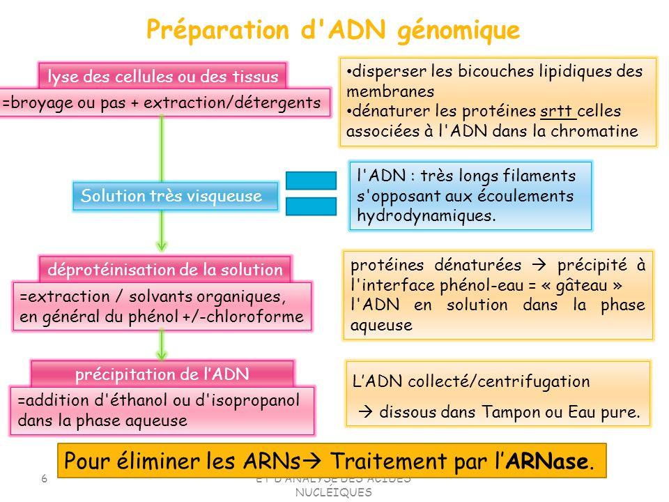 TD1.TECHNIQUES DE SEPARATION ET DANALYSE DES ACIDES NUCLÉIQUES 6 lyse des cellules ou des tissus =broyage ou pas + extraction/détergents disperser les