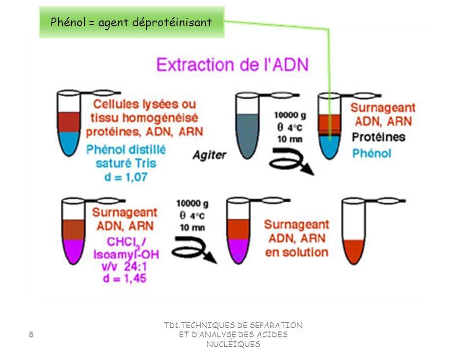 TD1.TECHNIQUES DE SEPARATION ET DANALYSE DES ACIDES NUCLÉIQUES 29 2.Séparation des acides nucléiques La technique la plus utilisée pour la séparation des acides nucléiques: Lélectrophorèse Principe général: Dans un milieu donné, la séparation des particules se fait en fonction de leur charge électrique et pour des charges identiques, en fonction de leur taille.
