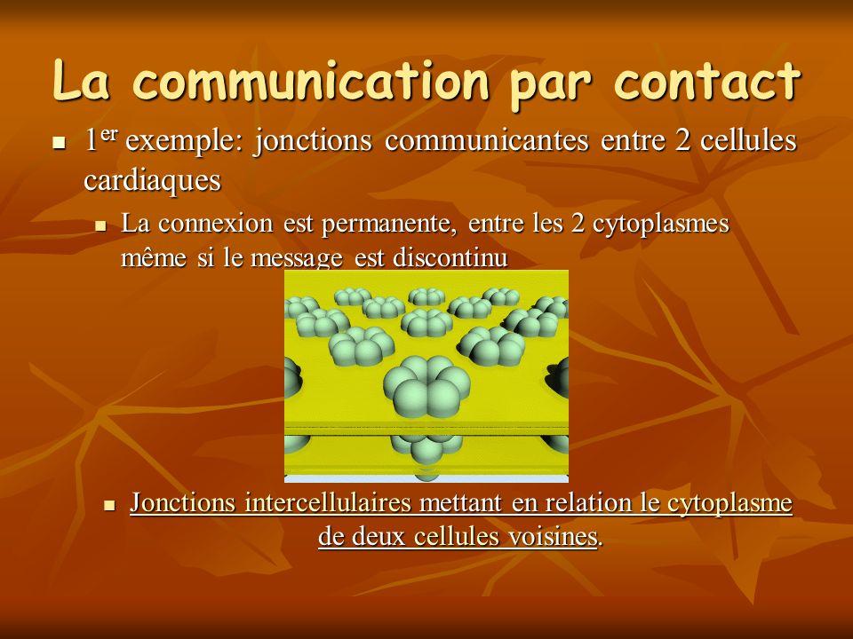 La communication par contact 1 er exemple: jonctions communicantes entre 2 cellules cardiaques 1 er exemple: jonctions communicantes entre 2 cellules cardiaques La connexion est permanente, entre les 2 cytoplasmes même si le message est discontinu La connexion est permanente, entre les 2 cytoplasmes même si le message est discontinu Jonctions intercellulaires mettant en relation le cytoplasme de deux cellules voisines.