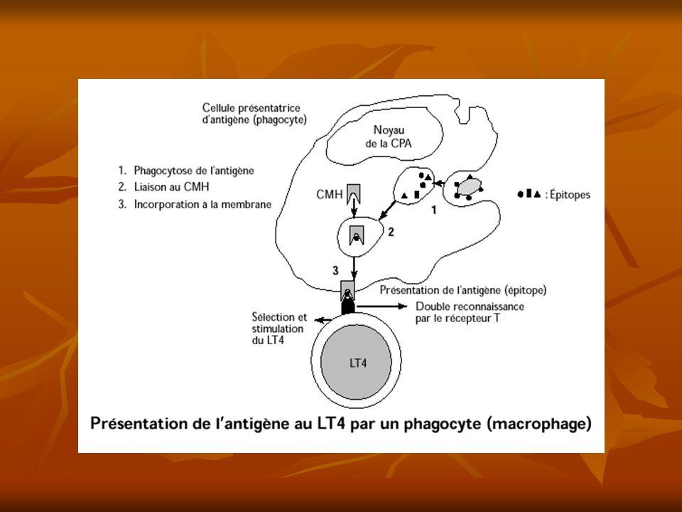 interférons Petites protéines produites par les cellules telles que monocytes, fibroblastes… Petites protéines produites par les cellules telles que monocytes, fibroblastes… En réponse à une infection virale En réponse à une infection virale Glycoprotéine Glycoprotéine En se fixant sur les cellules saines, il provoque la synthèse de molécules antivirales dans leur cytoplasme, qui stoppent la multiplication du virus en empêchant la traduction des ARN messagers viraux En se fixant sur les cellules saines, il provoque la synthèse de molécules antivirales dans leur cytoplasme, qui stoppent la multiplication du virus en empêchant la traduction des ARN messagers viraux Médicament: SIDA, Hépatite C Médicament: SIDA, Hépatite C