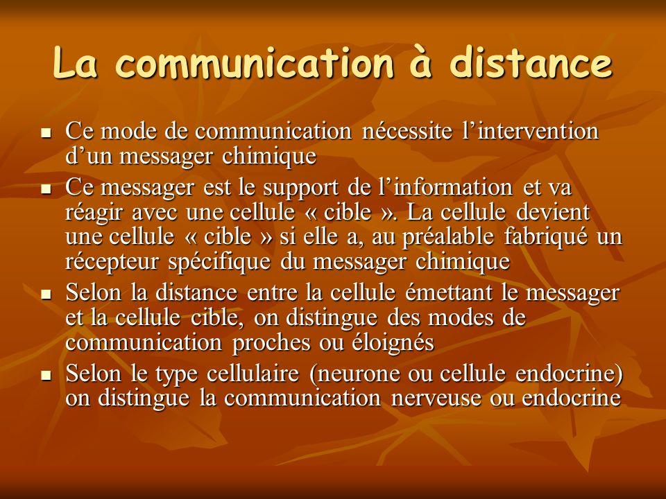 La communication à distance Ce mode de communication nécessite lintervention dun messager chimique Ce mode de communication nécessite lintervention dun messager chimique Ce messager est le support de linformation et va réagir avec une cellule « cible ».