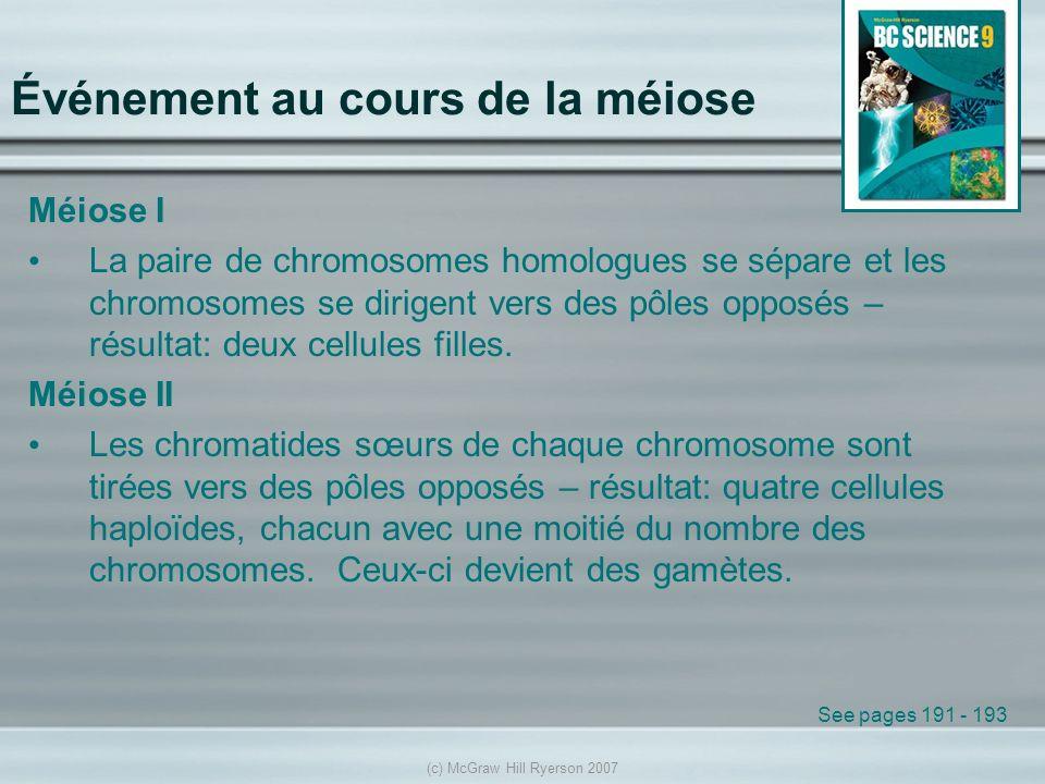 (c) McGraw Hill Ryerson 2007 Événement au cours de la méiose Méiose I La paire de chromosomes homologues se sépare et les chromosomes se dirigent vers