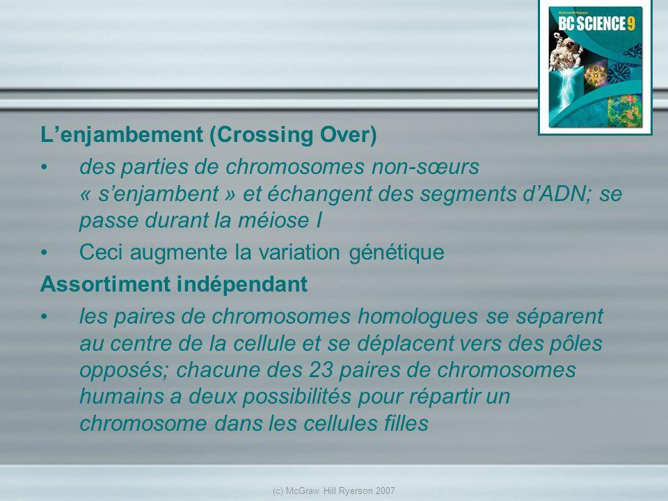 Lenjambement (Crossing Over) des parties de chromosomes non-sœurs « senjambent » et échangent des segments dADN; se passe durant la méiose I Ceci augm