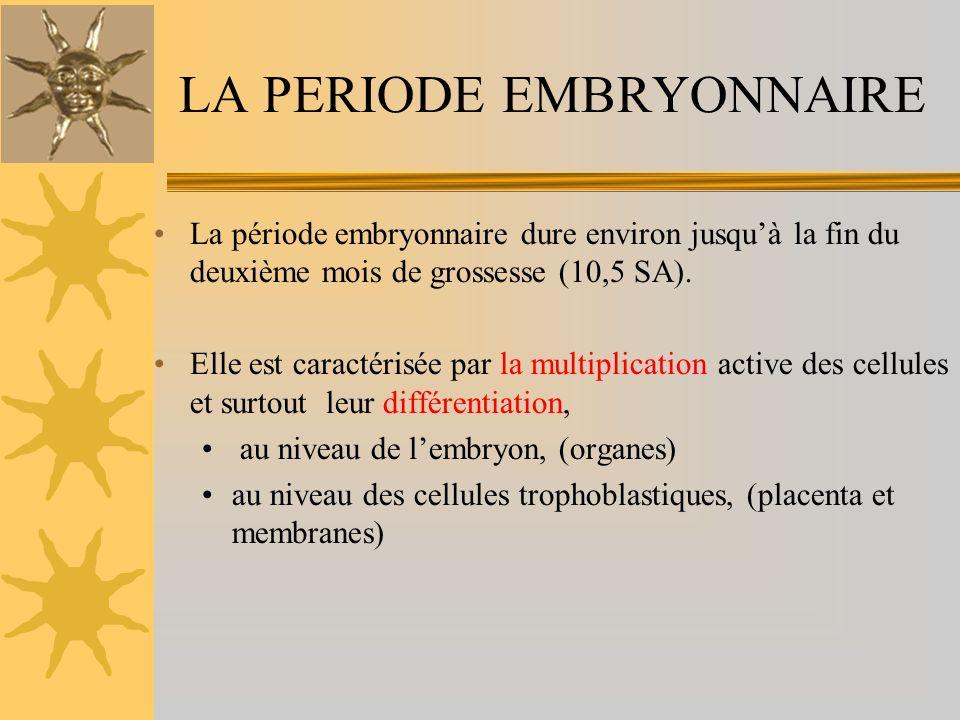 LA PERIODE EMBRYONNAIRE La période embryonnaire dure environ jusquà la fin du deuxième mois de grossesse (10,5 SA). Elle est caractérisée par la multi