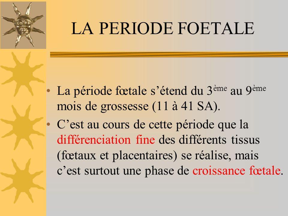 LA PERIODE FOETALE La période fœtale sétend du 3 ème au 9 ème mois de grossesse (11 à 41 SA).