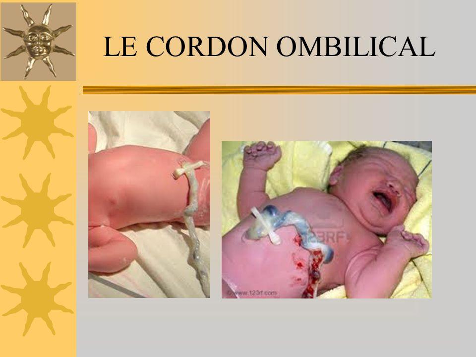 LE CORDON OMBILICAL