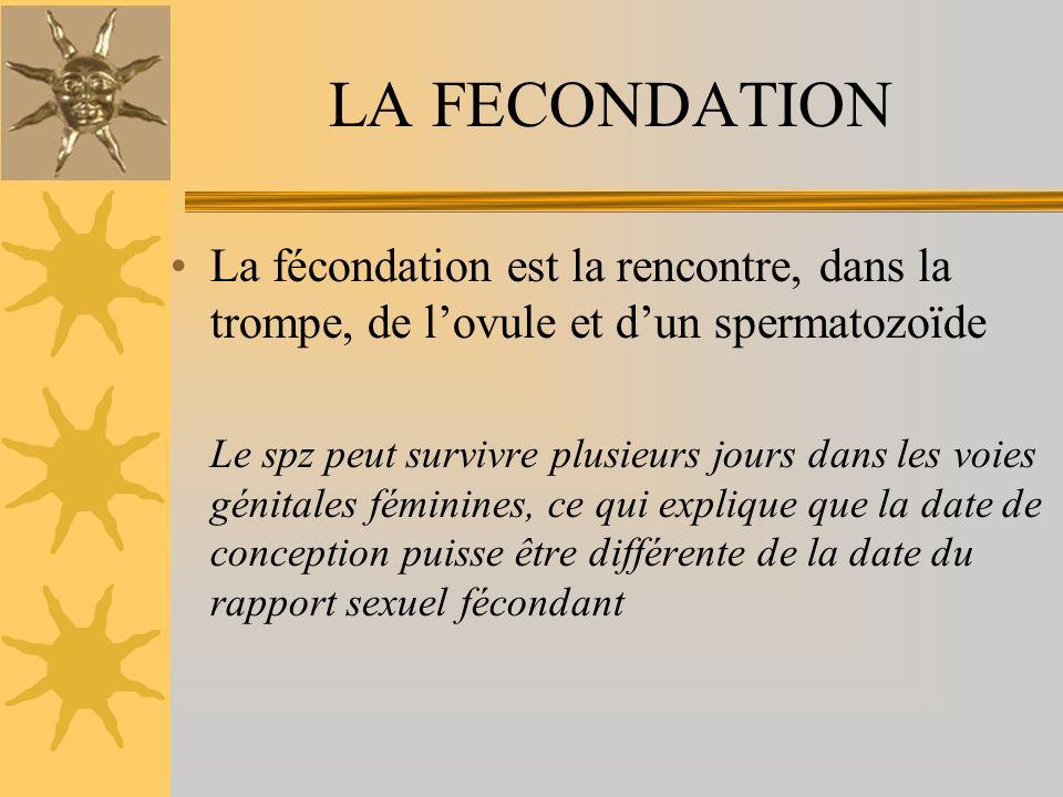 La fécondation est la rencontre, dans la trompe, de lovule et dun spermatozoïde Le spz peut survivre plusieurs jours dans les voies génitales féminines, ce qui explique que la date de conception puisse être différente de la date du rapport sexuel fécondant