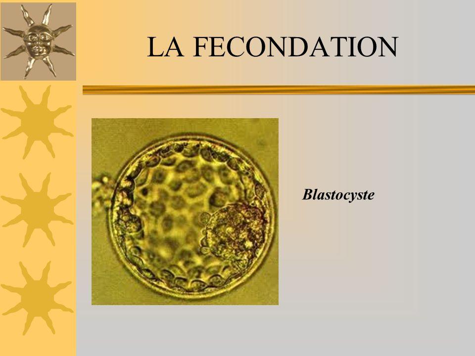 LA NIDATION La nidation a lieu vers le 6 ème jour postconceptionnel Elle correspond à limplantation du blastocyste au niveau lendomètre, sous linfluence des hormones secrétées par le corps jaune ovarien (cicatrice de lovulation).