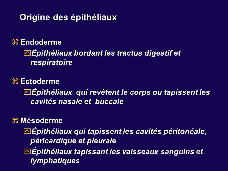Origine des épithéliaux Endoderme Épithéliaux bordant les tractus digestif et respiratoire Ectoderme Épithéliaux qui revêtent le corps ou tapissent le