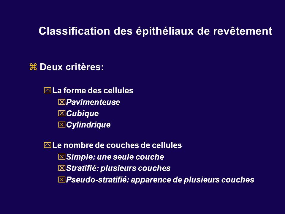 Classification des épithéliaux de revêtement Deux critères: La forme des cellules Pavimenteuse Cubique Cylindrique Le nombre de couches de cellules Si