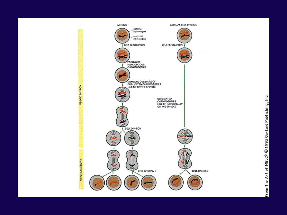 Spécialisation de la surface cellulaire: cils Longues extensions cellulaires ( de 5 à 10µm) dont la structure interne est constituée par un agencement particulier de microtubules Par leur mouvement saccadé, ils jouent un rôle dans le mouvement des liquides et des substances à la surface épithéliale