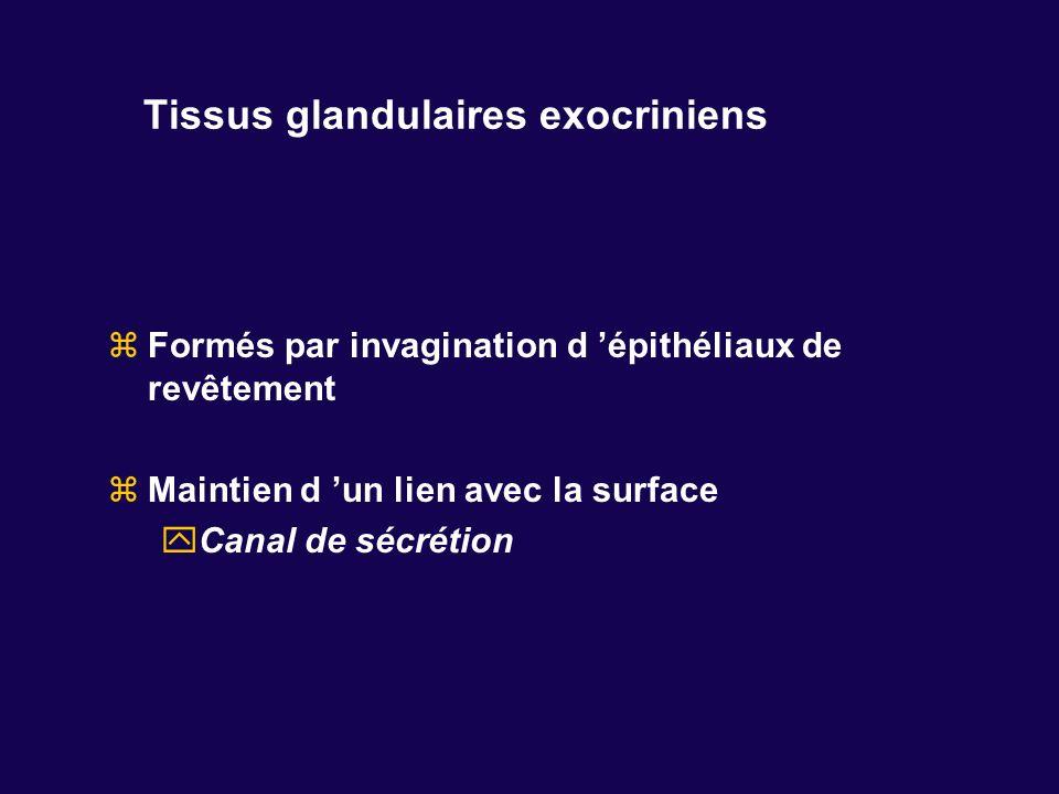 Tissus glandulaires exocriniens Formés par invagination d épithéliaux de revêtement Maintien d un lien avec la surface Canal de sécrétion