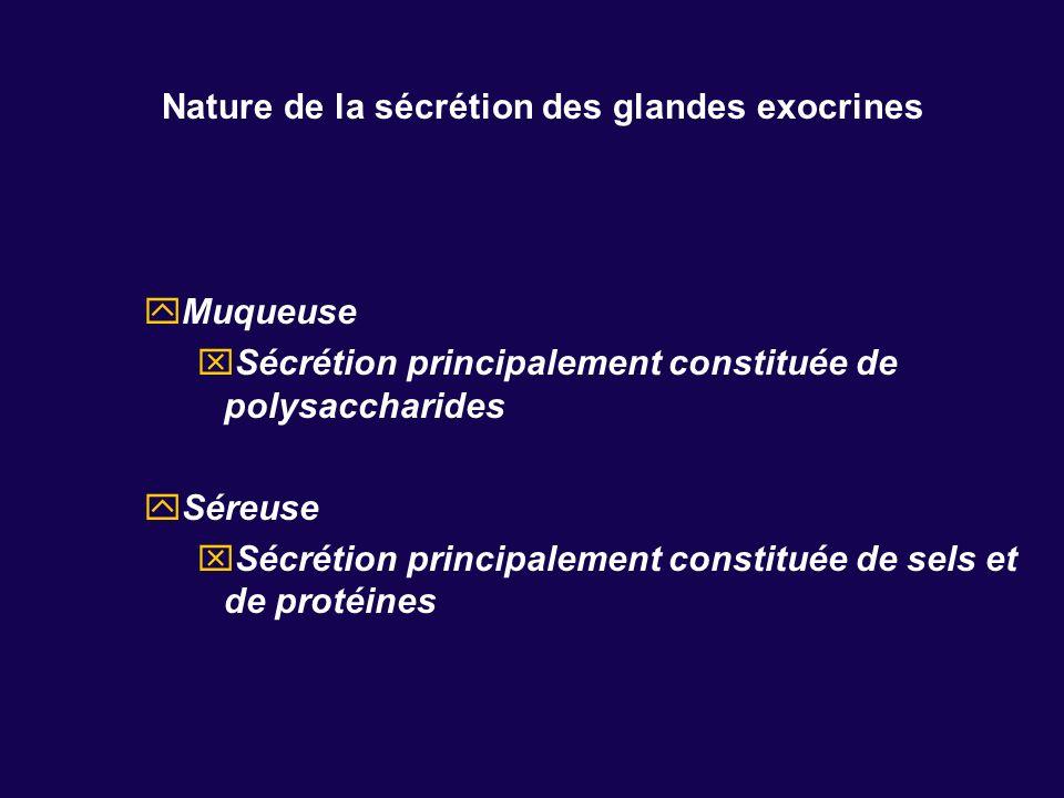 Nature de la sécrétion des glandes exocrines Muqueuse Sécrétion principalement constituée de polysaccharides Séreuse Sécrétion principalement constitu