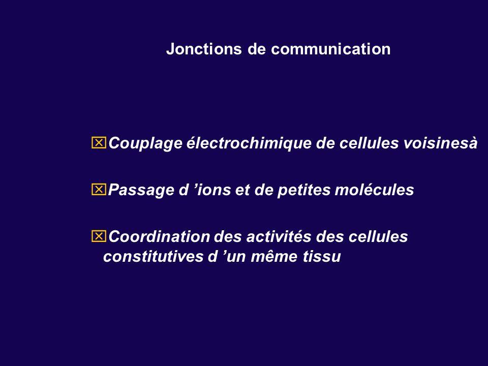Jonctions de communication Couplage électrochimique de cellules voisinesà Passage d ions et de petites molécules Coordination des activités des cellul