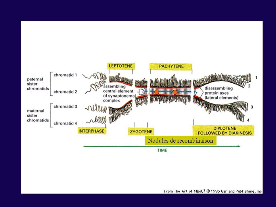 Nature de la sécrétion des glandes exocrines Muqueuse Sécrétion principalement constituée de polysaccharides Séreuse Sécrétion principalement constituée de sels et de protéines