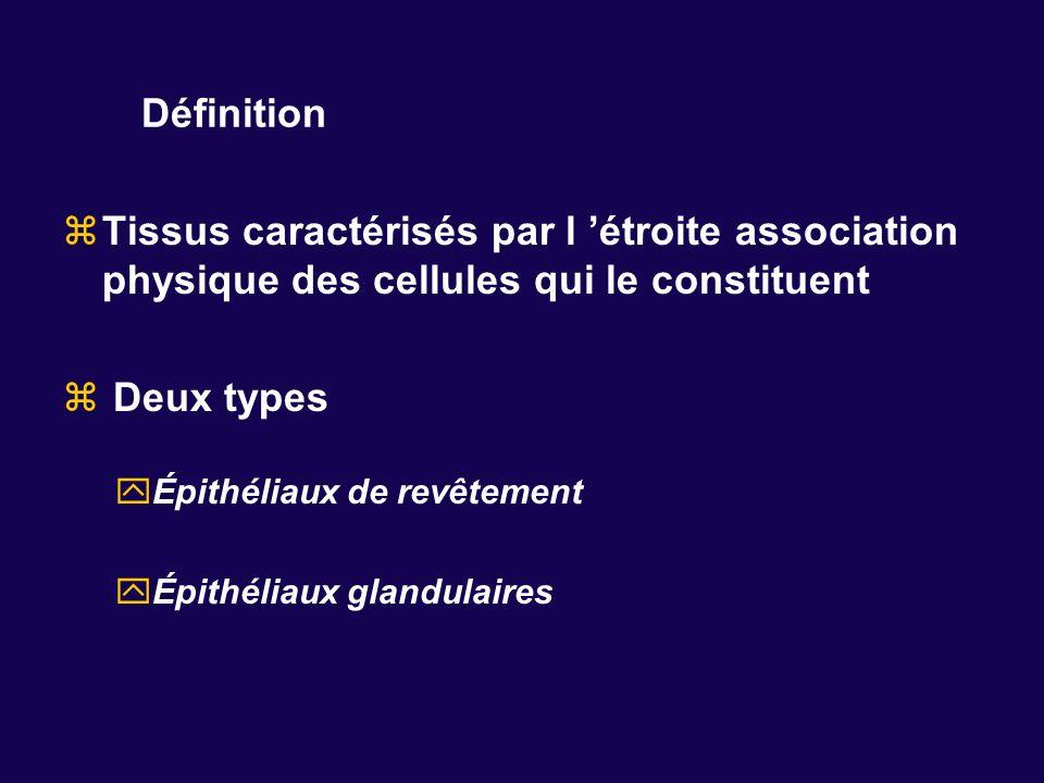 Définition Tissus caractérisés par l étroite association physique des cellules qui le constituent Deux types Épithéliaux de revêtement Épithéliaux gla