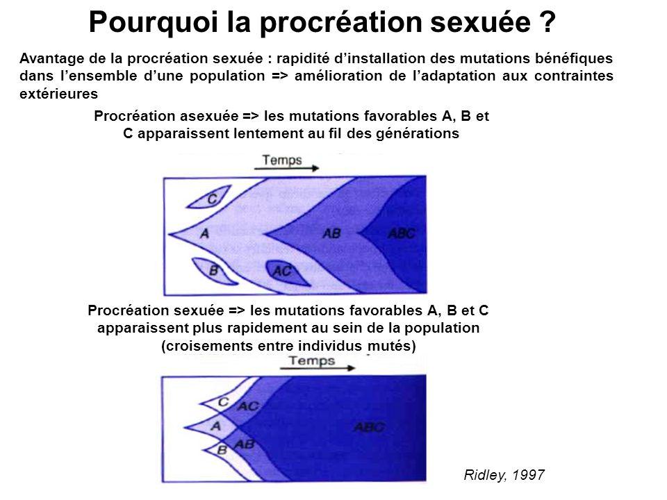 Avantage de la procréation sexuée : rapidité dinstallation des mutations bénéfiques dans lensemble dune population => amélioration de ladaptation aux