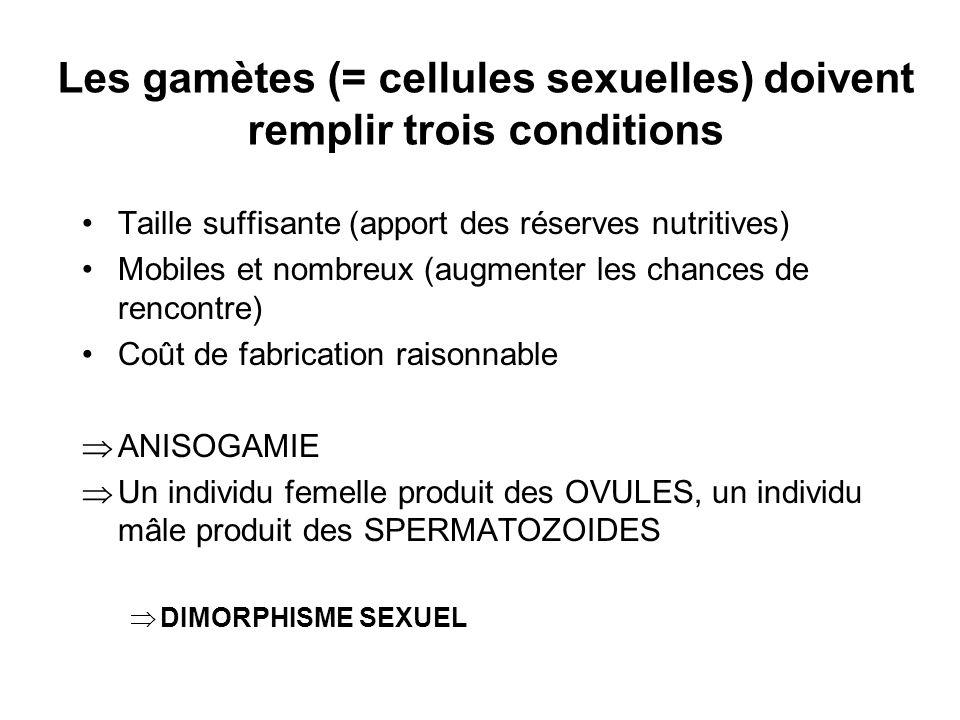 Les gamètes (= cellules sexuelles) doivent remplir trois conditions Taille suffisante (apport des réserves nutritives) Mobiles et nombreux (augmenter