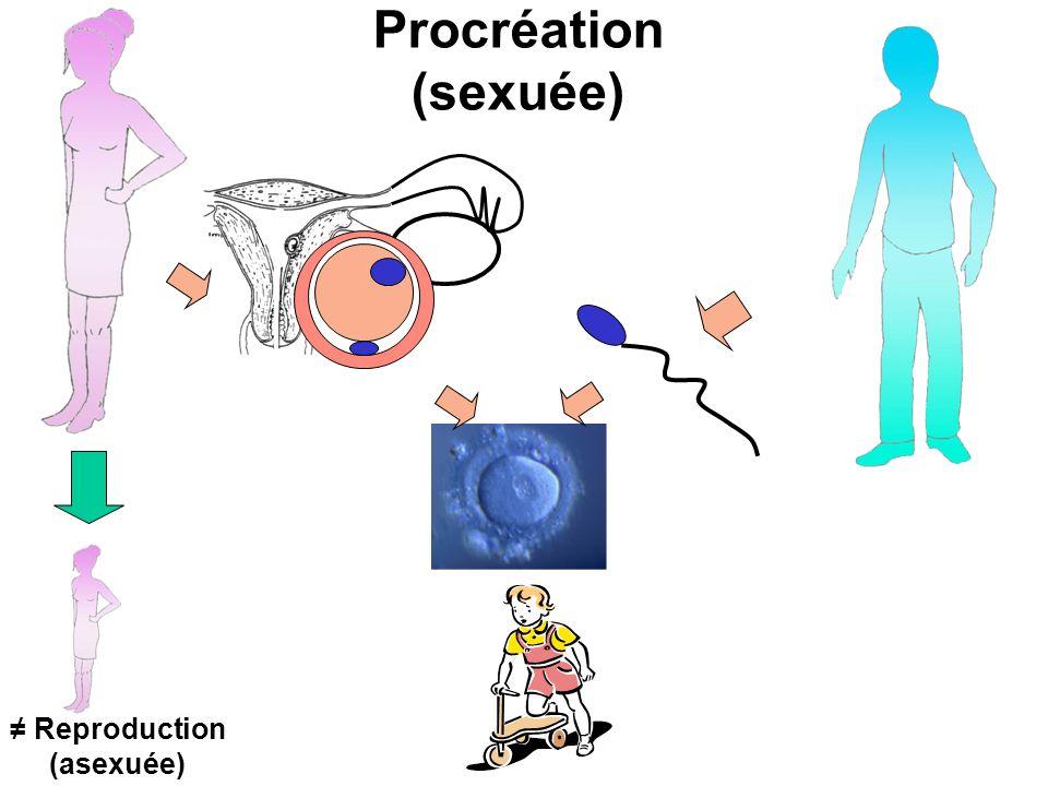 Procréation (sexuée) Reproduction (asexuée)
