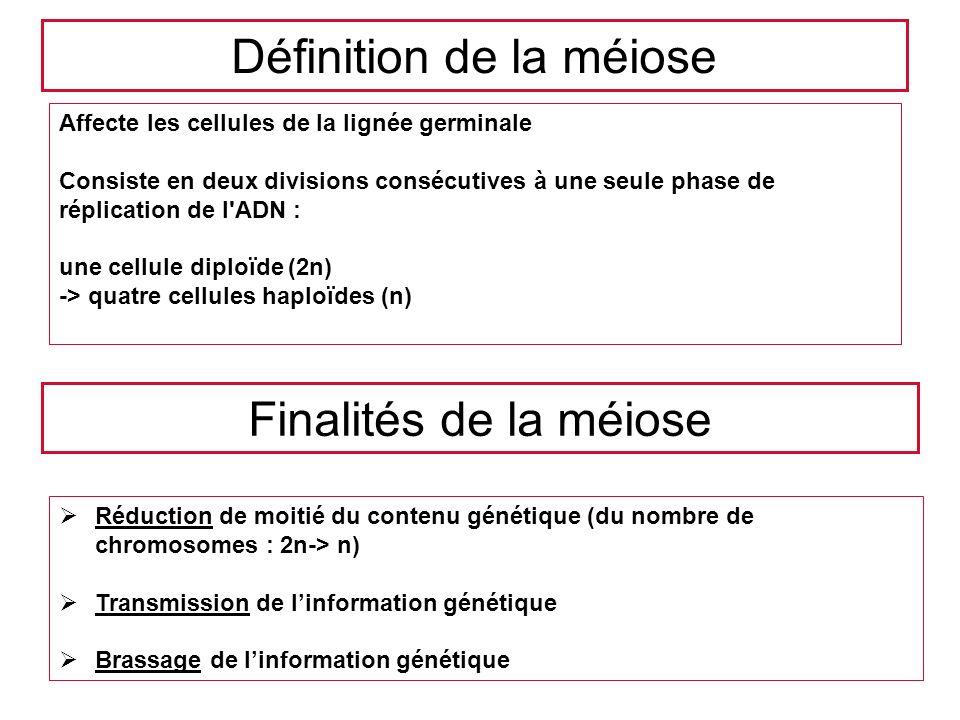 Finalités de la méiose Réduction de moitié du contenu génétique (du nombre de chromosomes : 2n-> n) Transmission de linformation génétique Brassage de