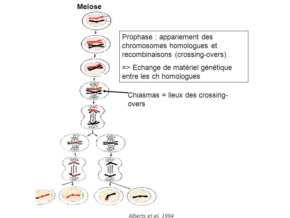 Alberts et al, 1994 Meiose Prophase : appariement des chromosomes homologues et recombinaisons (crossing-overs) => Echange de matériel génétique entre