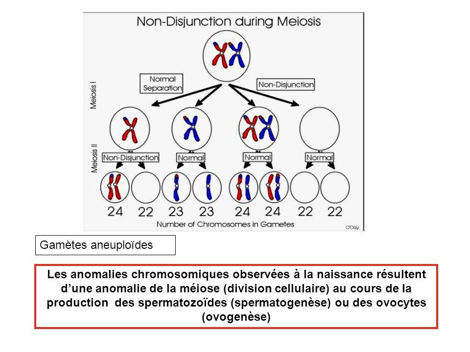 Les anomalies chromosomiques observées à la naissance résultent dune anomalie de la méiose (division cellulaire) au cours de la production des spermat