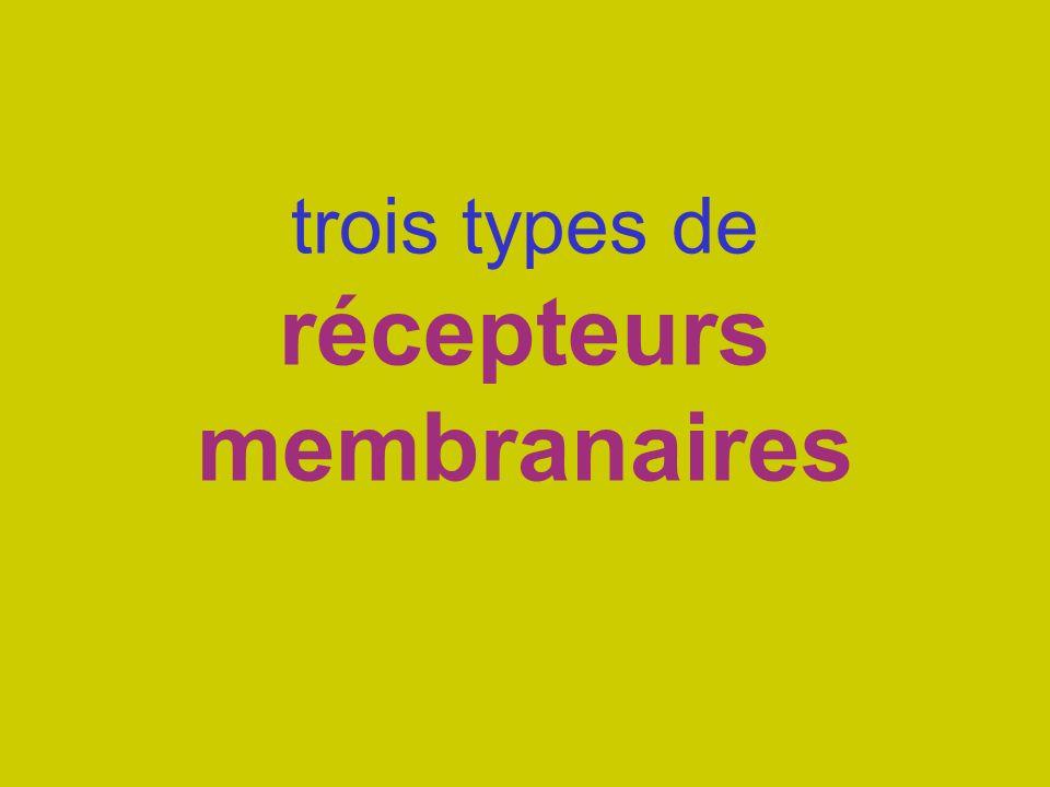 trois types de récepteurs membranaires