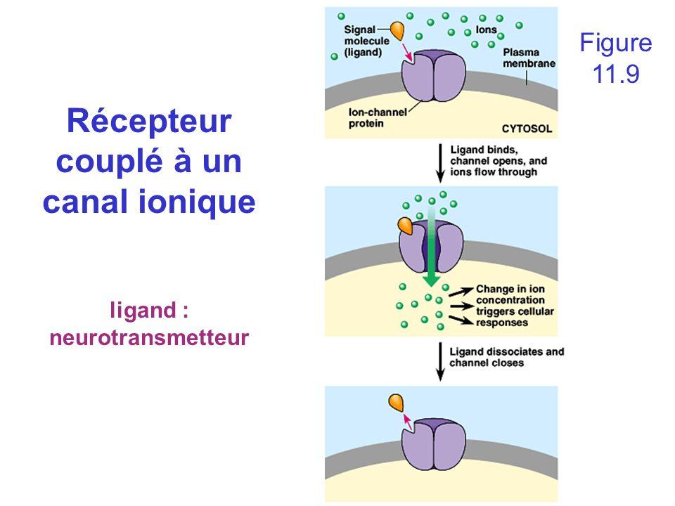 ligand : neurotransmetteur Figure 11.9 Récepteur couplé à un canal ionique