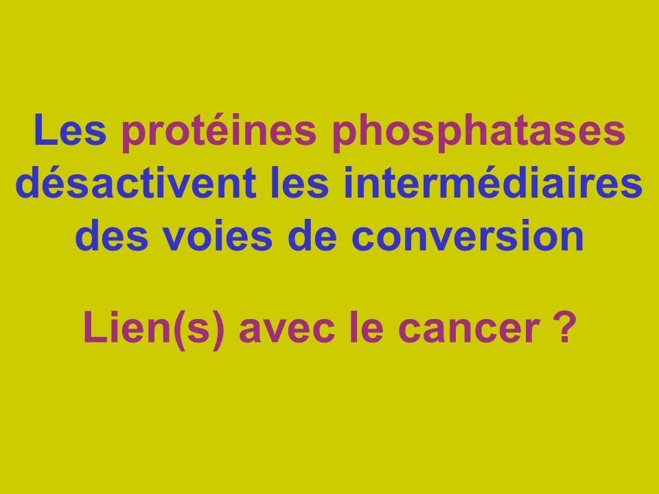Les protéines phosphatases désactivent les intermédiaires des voies de conversion Lien(s) avec le cancer ?