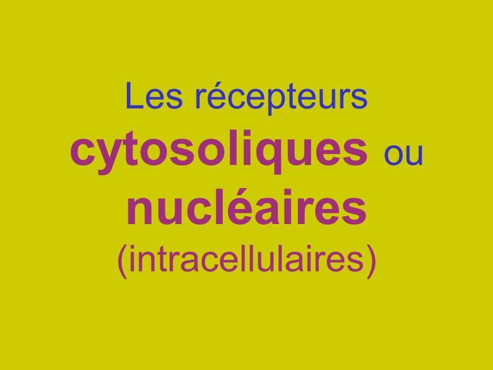 Les récepteurs cytosoliques ou nucléaires (intracellulaires)