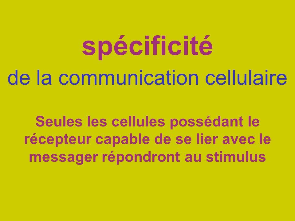 spécificité de la communication cellulaire Seules les cellules possédant le récepteur capable de se lier avec le messager répondront au stimulus