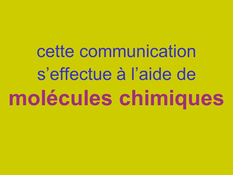 cette communication seffectue à laide de molécules chimiques