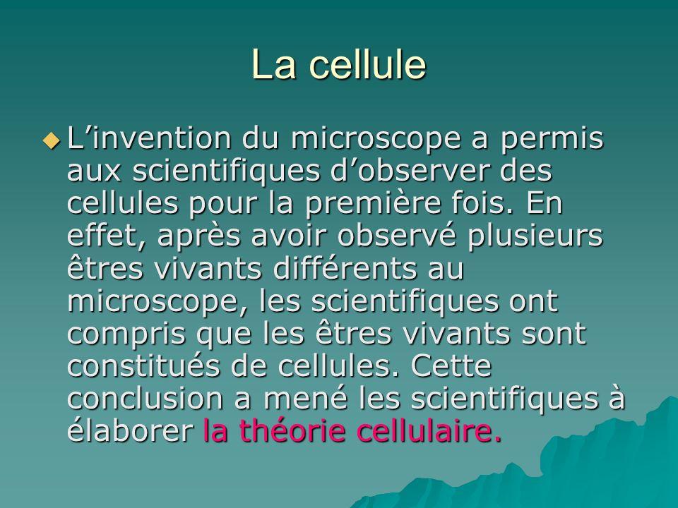 La cellule Linvention du microscope a permis aux scientifiques dobserver des cellules pour la première fois. En effet, après avoir observé plusieurs ê