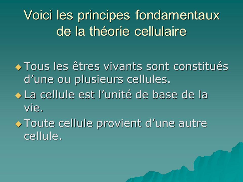Voici les principes fondamentaux de la théorie cellulaire Tous les êtres vivants sont constitués dune ou plusieurs cellules. Tous les êtres vivants so